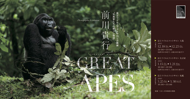 Greatapes